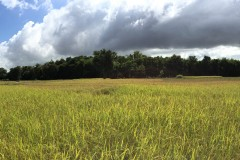 Don Kho Island, Ban Saphai and Wat Chompet