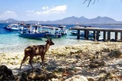 Diving and snorkelling at Menjangan Island