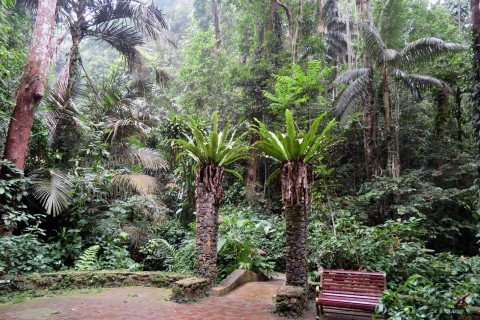 Some great spots to relax in. Photo taken in or around Penang Botanic Gardens, Penang, Malaysia by Sally Arnold.