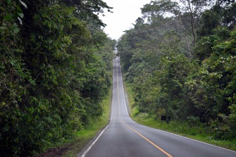 Let us show you the way ... Photo taken in or around How to do Khao Yai National Park, Khao Yai National Park, Thailand by David Luekens.
