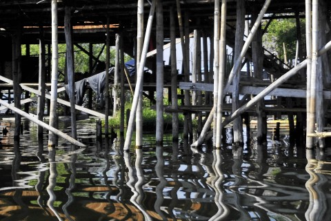 The underside. Photo taken in or around Floating gardens and fishing villages, Inle Lake, Burma_myanmar by Mark Ord.
