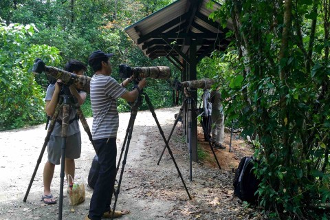 Twitchers getting all twitchy. Photo taken in or around Sungei Buloh Wetland Reserve, Downtown Singapore, Singapore by Sally Arnold.