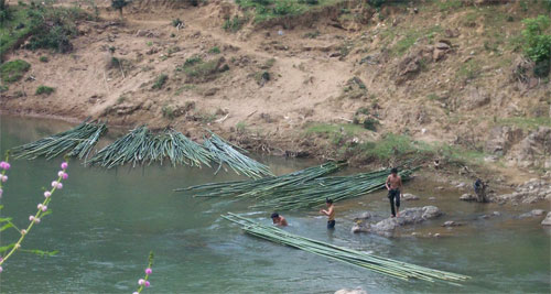 Working bamboo in the river
