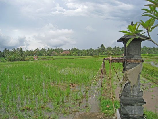 Fields and villas, Ubud, Bali