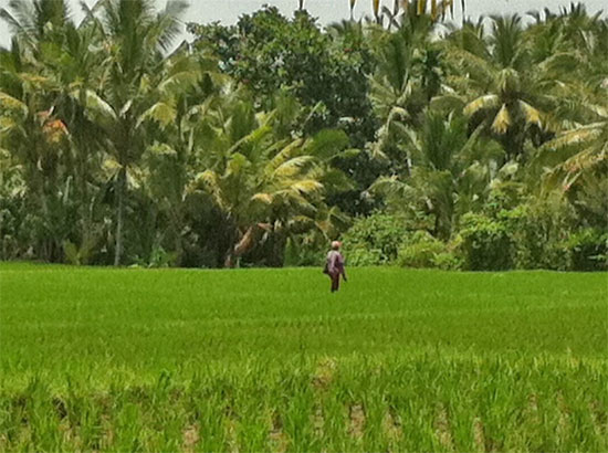 Farmer walking through fields