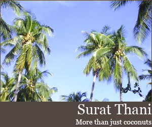 Photo for Surat Thani