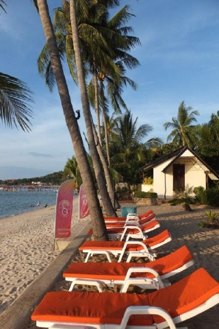 Deck chairs on Samui's beaches