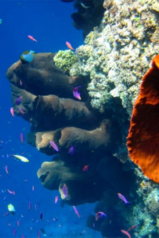 Learning to dive on the Togean Islands