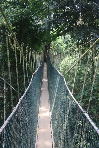 Photo of Canopy Walkway and Teresek Hill