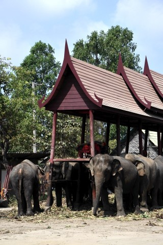 Photo of Elephant Stay at the Royal Elephant Kraal
