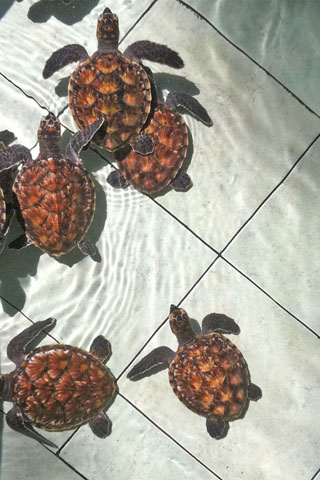 Photo of Bolong Turtle Sanctuary