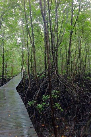 Photo of Khun Krabaen Mangrove Trail