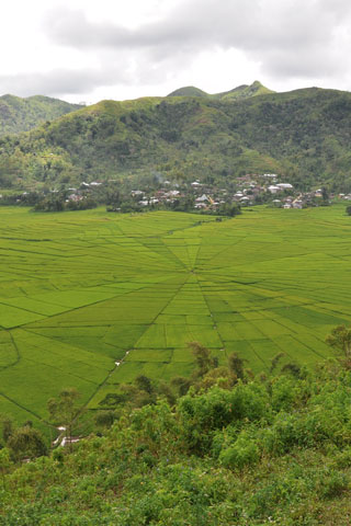 Photo of Spider web fields at Cancar
