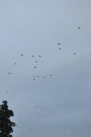 Hornbill trip