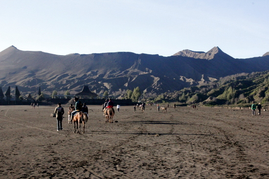 Horses making the journey across the Lautan Pasir to Bromo