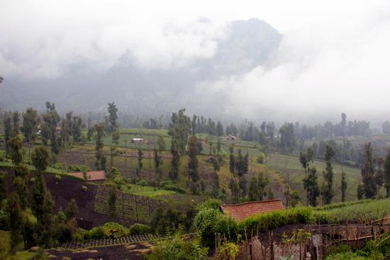 Cemoro Lawang landscape