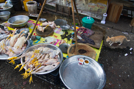 Cats - the unmentioned victims of Yangon's new ban on street vendors.