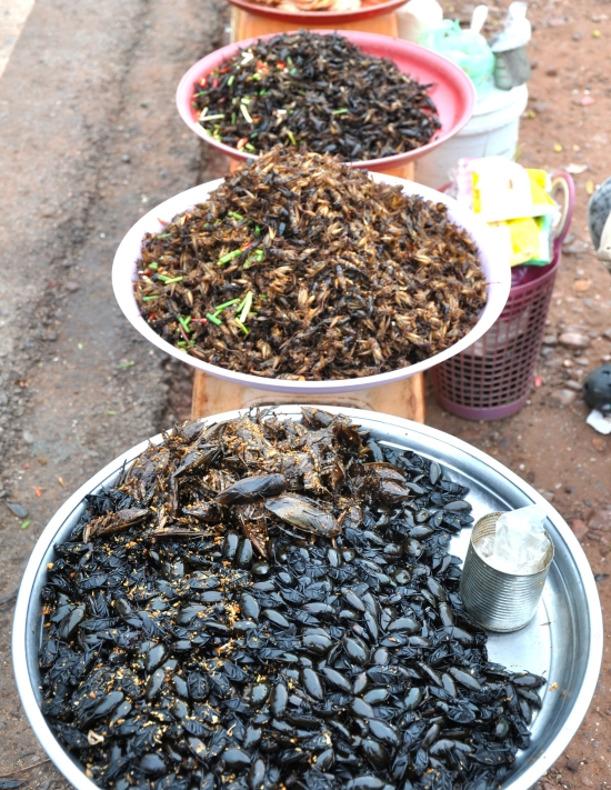 All kinds of edible bugs and beetles are on offer at the Siem Reap funfair.