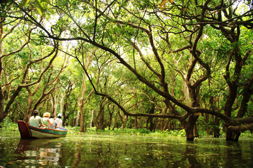 The flooded forest of Kompong Phluk