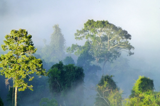 Misty jungle in the morning