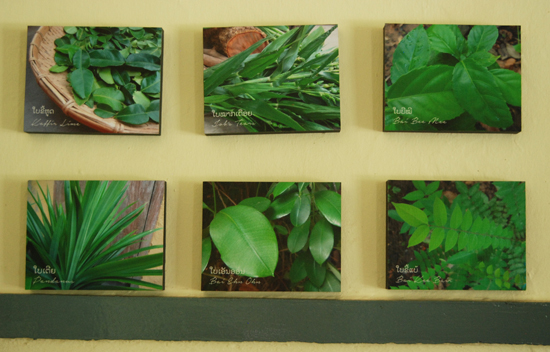 Photos explain some of the aromatic plants used in the sauna.
