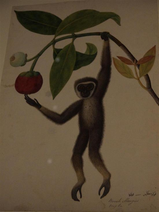 Gibbons are long extinct in Singapore, but this painting survives.