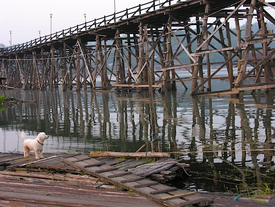 Big bridge, little dog.