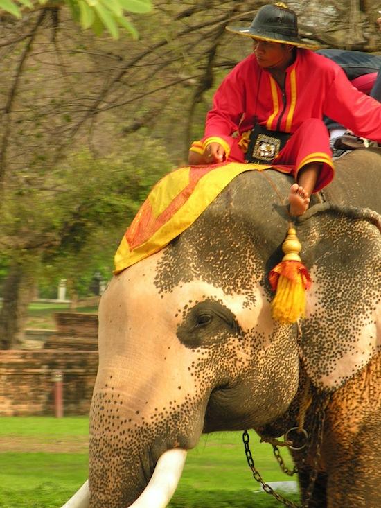 Ayutthaya's elephants enjoy a splash too.