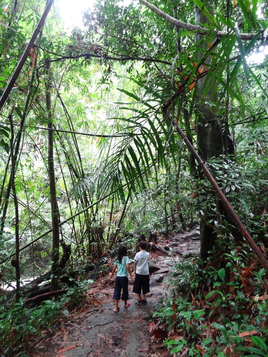 Lots to discover along Bang Pae waterfall's jungle path.