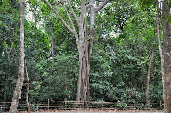 The two temples have preserved large swathes of old forest.