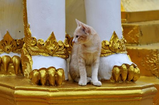 Wat Phra Singh guardian lion and cat
