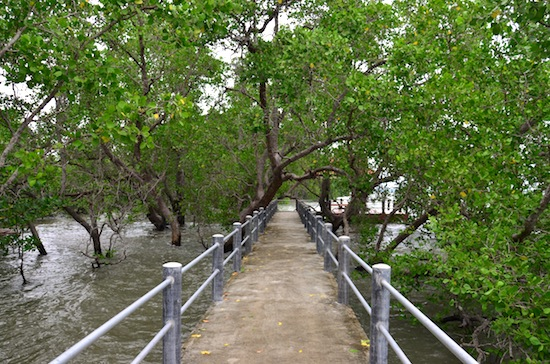 High tide in the mangroves.