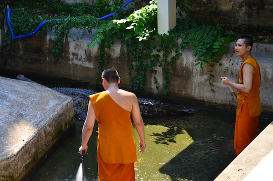 Monks and crocs -- must be Wat Chakrawat.