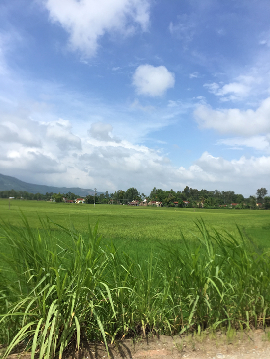 Rice fields of Quang Ngai. You can feel the dramatic change in weather and landscape on the other side of the mountain pass.