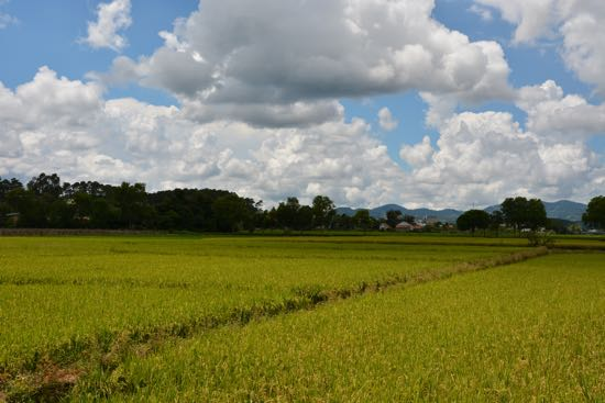 Da Lat has rice fields