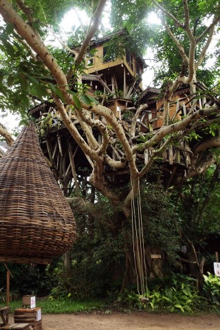 Photo of Pai Tree House