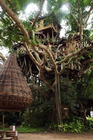 Photo of Pai Tree House